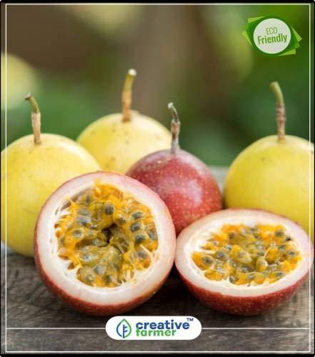 Pinkdose Fruchtsamen Gemischte Maracuja - Exotische Samen schnell Fruchtpflanzensamen Fruchtsamen Gemüsegarten-Pflanzensamen 5Indoor, Outdoor-Küche Garten Pflanzensamen Seed