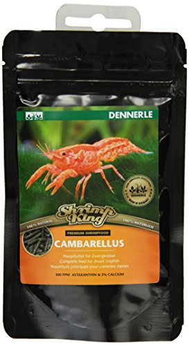 dennerle-shrimp-king-cambarellus
