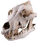 Totenkopf-Nachbildung des Totenkopfs aus Kunstharz, realistischer Totenkopf, Gothic-Stil, Halloween, Totes Skelett