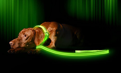 Illumiseen LED Dog Collar - USB Rechargeable - Your Dog Will Be More Visible & Safe - 6 Colours (Red, Blue, Green, Pink, Orange & Yellow) and 4 Sizes - Perfect To Use With Our Matching Lead 8