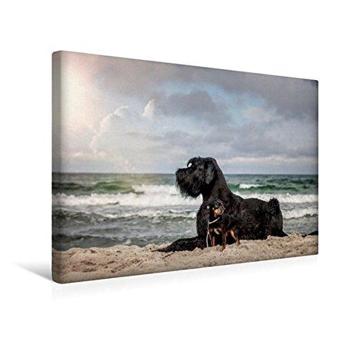 Premium Textil-Leinwand 45 cm x 30 cm quer, Hunde am Meer | Wandbild, Bild auf Keilrahmen, Fertigbild auf echter Leinwand, Leinwanddruck: Tierische Freundschaft (CALVENDO Tiere) (Beschützer Planer)