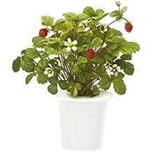 Click & Grow 4742793006536 - Kit de crecimiento y repuesto (Planta comestible, Recarga, 7 - 14, 1 - 2, 2 - 4, Color blanco)