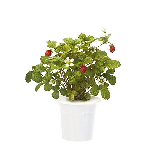 Click & Grow Wild Strawberry Refill 3-Pack for Smart Herb (Berry Water Garden)