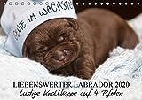 Liebenswerter Labrador 2020 (Tischkalender 2020 DIN A5 quer): Lustige Knallköppe auf 4 Pfoten (Monatskalender, 14 Seiten ) (CALVENDO Tiere)