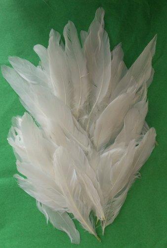 Federkiel Craft Federn-Weiß-1Pack-Durchschnittliche 50Stück in jeder Packung für Sammelalben und zum Basteln (Brownie Kostüm)