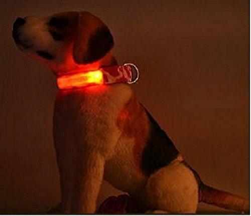 LED Hunde Leuchthalsband in 7 Farben Hund Halsband Katze leuchtet Licht Blinki 5 Größen XS S M L XL (L, Grün) - 3