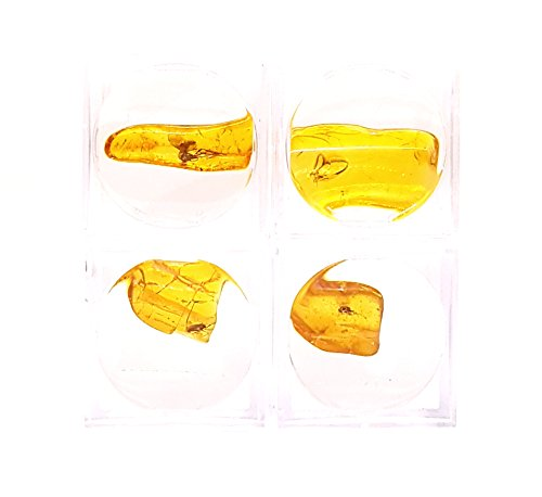 Natürliche Edelstein BERNSTEIN mit Einschlüsse Insekt Fossilie / Einschlüsse Insekt in Baltischen Bernstein / Lupenbox / 4 Stück (Mit Insekt Bernstein)
