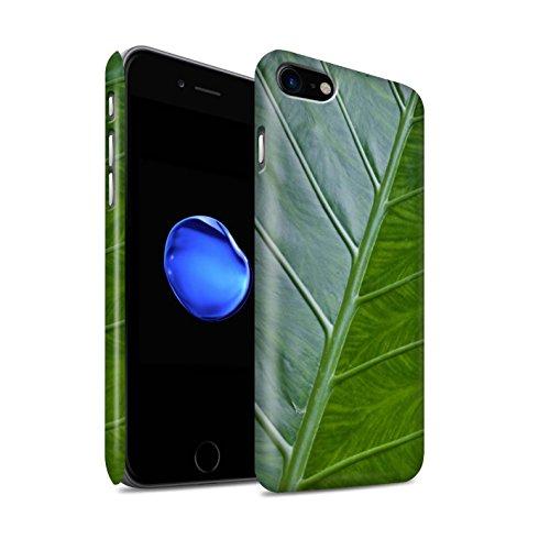 STUFF4 Matte Snap-On Hülle / Case für Apple iPhone 8 / Stechpalme Muster / Pflanzen/Blätter Kollektion Vene
