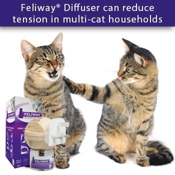 thyroid disease in cats
