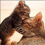 Woodmansterne Geburtstagskarte/Grußkarte, (8375), Mutter für Katzen und Kätzchen