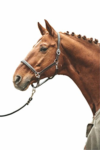 HKM 558732 Lederhalfter Simple, Warmblut, Dunkelbraun
