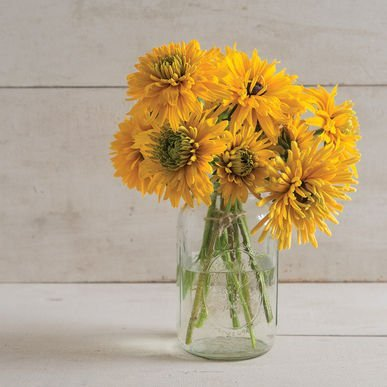 Seeds (Rudbeckia hirta) 30+ Rare Seeds + FREE Bonus 6 Variety Seed Pack - a $29.95 Value! Packed in FROZEN SEED CAPSULES for Growing Seeds Now or Saving Seeds For Years (Goldilocks Disney)