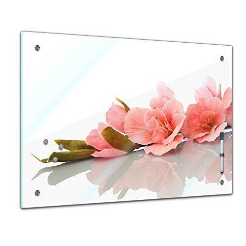 Memoboard 60 x 40 cm, Pflanzen - Gladiole - Memotafel Pinnwand - Blatt - Blüte - bunt - Garten - Blume - Pflanzenmotiv - Zierpflanze - Schwertlilie - Lilie - Natur - Blumenbild - Glasbild -