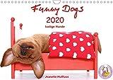 Funny Dogs (Wandkalender 2020 DIN A4 quer): lustige Hunde (Monatskalender, 14 Seiten ) (CALVENDO Tiere)