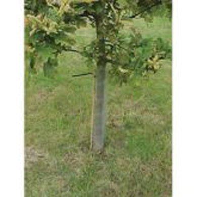 50-x-spiral-tree-guards-60cm-a315