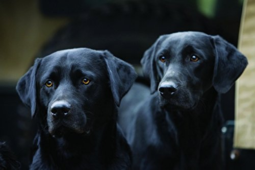 schwarzer-labrador-notizkarten-10er-set
