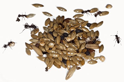 50g Type I Seed Mix for Granivorous queens ants and ants colony