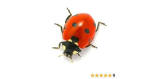 Sticker Car Motorbike Deco Animal Animals Coccinelle Insect Child