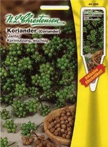 Koriander Jantar (Portion inkl. Stecketikett)