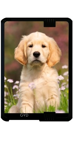 case-for-kindle-fire-hd-7-2012-version-a-cute-golden-retriever-puppy-by-katho-menden