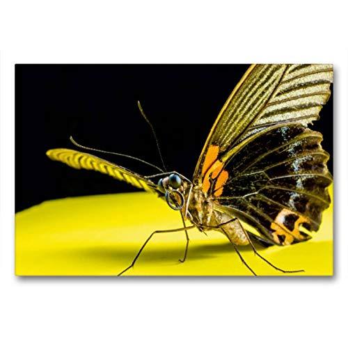 Calvendo Premium Textil-Leinwand 90 cm x 60 cm quer, Schmetterling   Wandbild, Bild auf Keilrahmen, Fertigbild auf echter Leinwand, Leinwanddruck: eines Schmetterlings Tiere Tiere -
