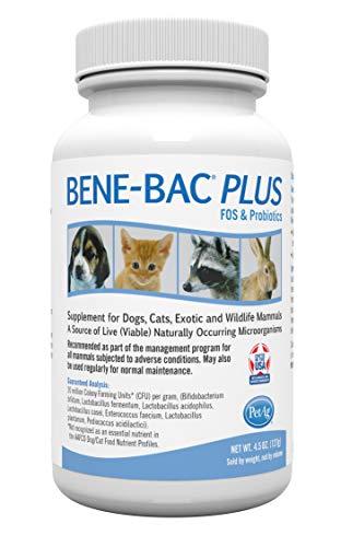 Suplementos probióticos para gatos