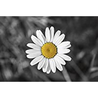 Suchergebnis Auf Amazon De Fur Fototapete Gaensebluemchen Bilder
