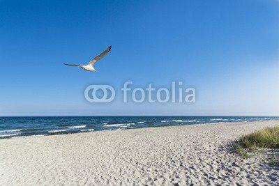 "Leinwand-Bild 30 x 20 cm: ""Möwe am Strand"", Bild auf Leinwand"