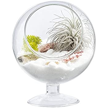 fu rechteck klar glas geometrische terrarium pflanzentopf mit deckel f r reptile des frischen. Black Bedroom Furniture Sets. Home Design Ideas