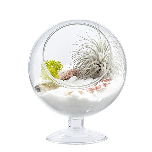 Mkouo Glas Kugel Pflanzen Terrarium Klein mit Deckel Tischplatte Sukkulente Moos Farn Blumentopf Deko, 13cm Durchmesser -