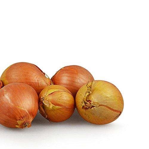 Zwiebelsamen - Allium cepa/Zittauer Gelbe 200 Samen