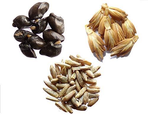 Vos Favoris 2014 - 3 sachets: 1 sachet de Grande Consoude 30 graines + 1 sachet de Grand Epeautre 3 grammes + 1 sachet de Seigle 3 grammes