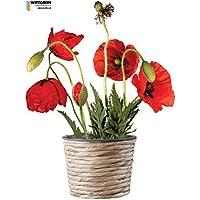 Suchergebnis auf Amazon.de für: Pflanzen - Fensterbilder ...