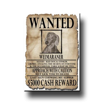 Weimaraner Wanted Fridge Magnet -