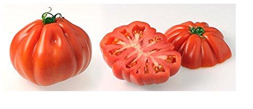 Lot de 50 Graines Potageres - Tomate Coeur de Boeuf rouge fruit legume potager