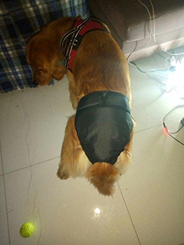 Generische Hundeschutzhose für Hündinnen, hundewindeln Inkontinenz Rüden, Umfang 43-60cm einstellbar, Schwarz - 6