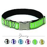 Jamory Hundehalsband Halsband Zubehör Unterwegs kleine mittelgroße große Hunde Nylon (M, Grasgrün)