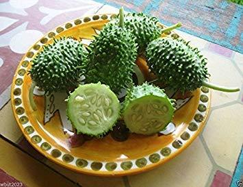 Shoppy Star Shoppy étoiles: 100 West Indian Gherkin (Cucumis anguria) concombre ronce ~ Semences Potagères, Heirloom