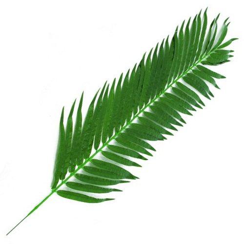Euro Palms 82509845 Kunstpflanze Kokosnuss-Königspalmwedel Stück, 150 cm, Plastik, Grün, 1.0 x 54.0 x 160.0 cm