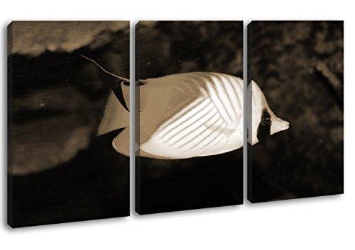 deyoli Dark entzückender Zierfisch Format: 3-teilig 120x80 Effekt: Sepia als Leinwandbild, Motiv fertig gerahmt auf Echtholzrahmen, Hochwertiger Digitaldruck mit Rahmen, Kein Poster oder Plakat