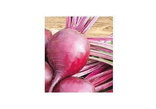 250x Rote Baby-Bete, Rote Rübe, Bonel – Rübensamen Gemüse K552