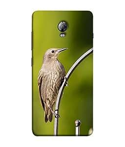 Fuson Designer Back Case Cover for Lenovo Vibe P1 :: Lenovo Vibe P1 Turbo :: Lenovo Vibe P1 Pro (flying bird cuckoo beautiful natural animal)