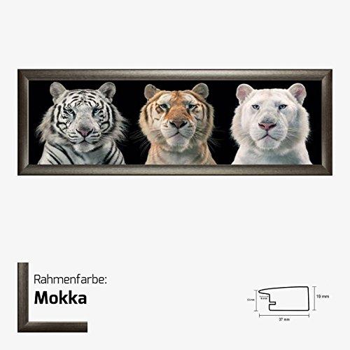 Kunstdruck Poster - Tiger Breeding Series Tim Flach 30,50 x 91,50 cm mit MDF-Bilderrahmen Pisa & Acrylglas reflexfrei, viele Farben zur Auswahl, hier Mokka (Print Mokka-tiger)