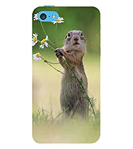Vizagbeats squirrel taking flowers Back Case Cover for Apple iPhone 6