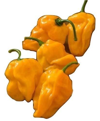 NUMEX SUAVE Orange, fast keine Schaerfe, interessante Form,10 Samen, von unserer ungarischen Farm samenfest, nur natürliche Dünger, KEINE Pesztizide