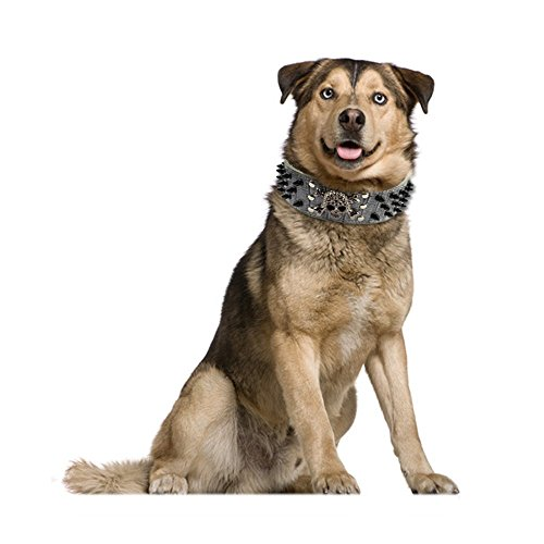 Berry Hundehalsband mit Nieten, PU-Leder, 5cm breit - 6