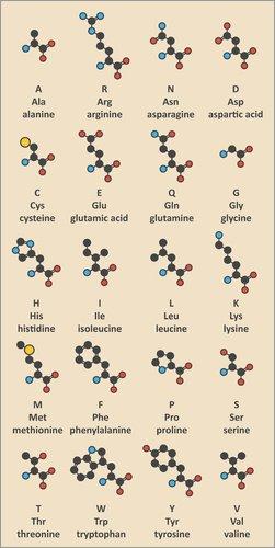 Posterlounge Acrylglasbild 90 x 180 cm: Aminosäuren-Moleküle von Molekuul/Science Photo Library - Wandbild, Acryl Glasbild, Druck auf Acryl Glas Bild