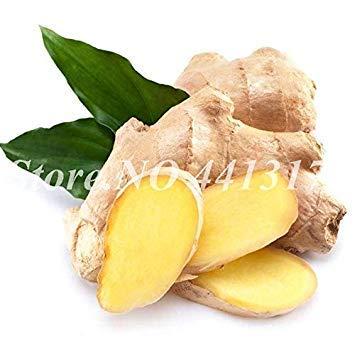nuovo arrivo! 1000 pc/sacchetto importato ginger balcone verdura in vaso bonsai pianta four seasons zingiber piante facili da coltivare: 200 pz