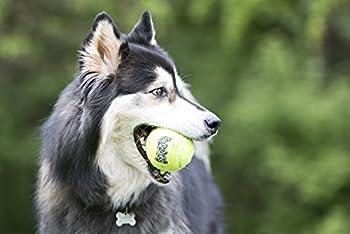 KONG Pack de 3 Airdog Air Squeaker Tennis Balle Jouets pour Chiens M
