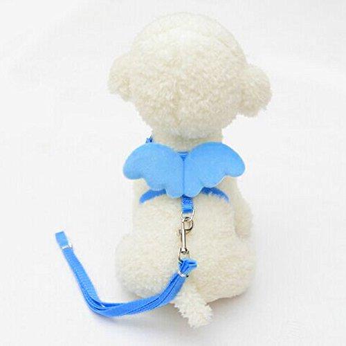 Yowablo Niedliche Angel Pet Dog Leads und Halsbänder Set für Small Pet Designer Wing einstellbar (20-32cm,Blau)